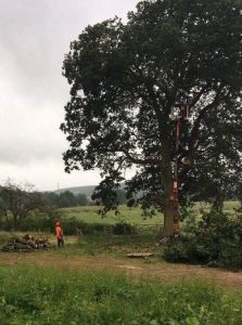 TREE SURGERY WORCESTERSHIRE
