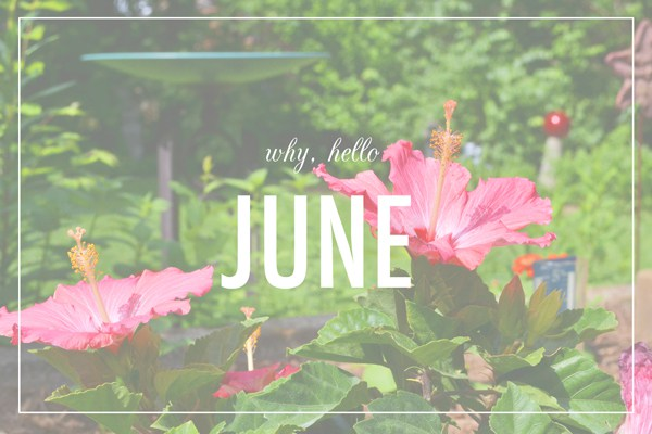 Jobs To Do In The Garden In June